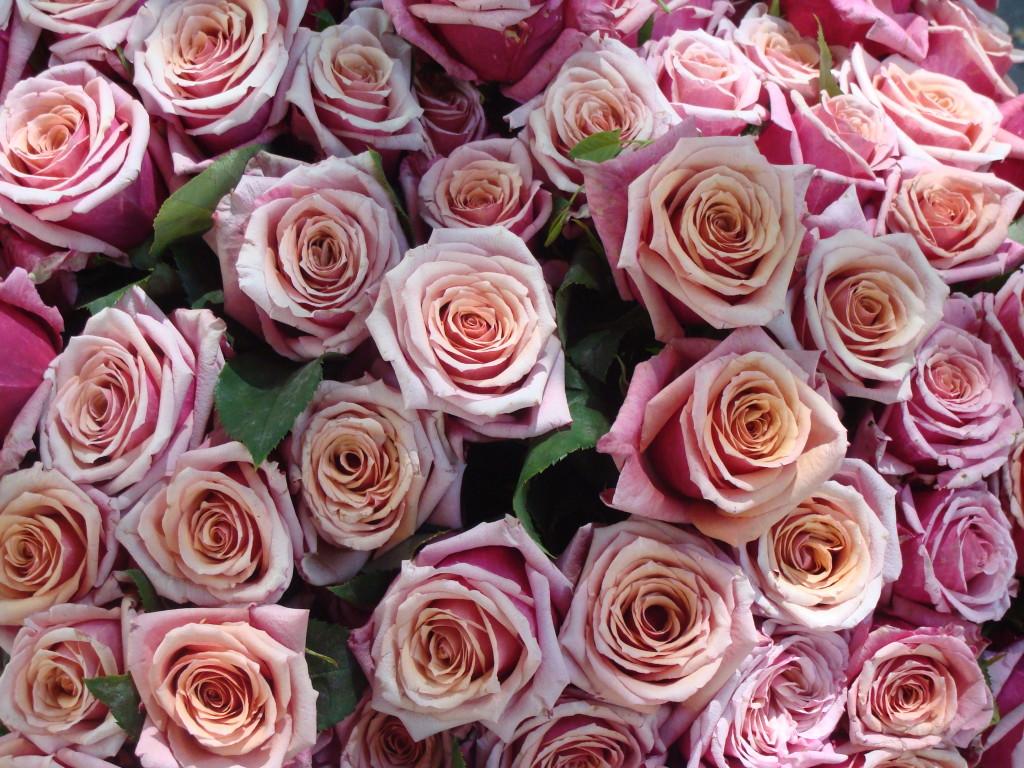 rosazol eller rozex